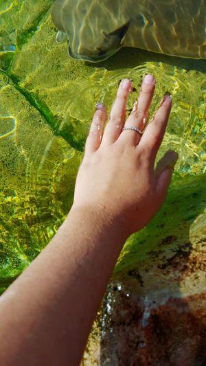 EyeEm Selects Sea World San Antonio, TX Vacation Stingray Close-up Hand Nature