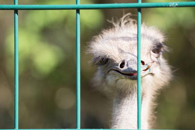 behind bars Animals Zoo Animals  FUNNY ANIMALS Animalsposing Animals Posing Beautiful Animals
