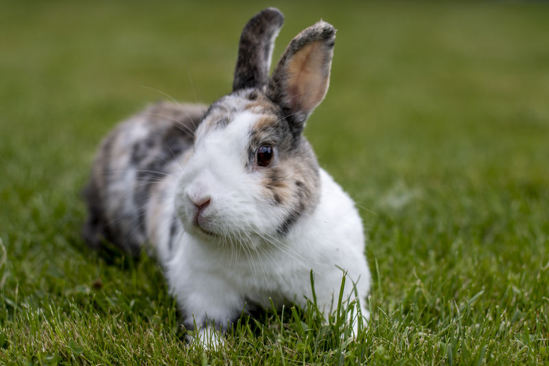 Easter Animal Animal Head  Animal Themes Close-up Day Domestic Domestic Animals Field Focus On Foreground Grass Green Color Herbivorous Land Mammal Nature No People One Animal Outdoors Pets Plant Rabbit Rabbit - Animal Vertebrate Whisker