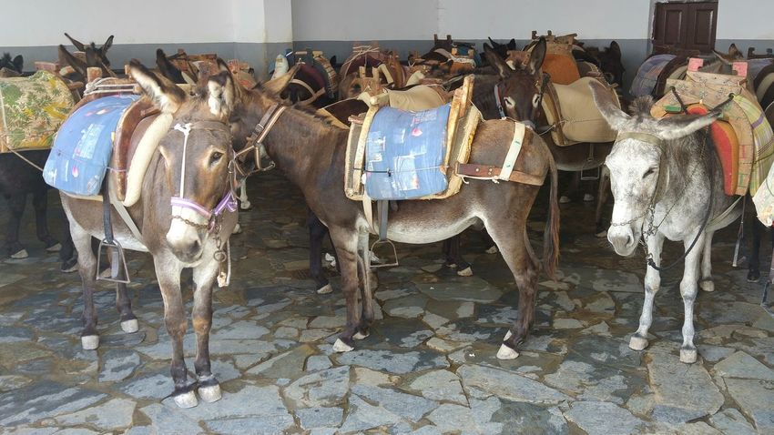 Donkeys Animal Themes Domestic Animals Lindos Greece Lindos Taxi Side By Side Rodos Greece Hidden Places Animals Done That Done That.