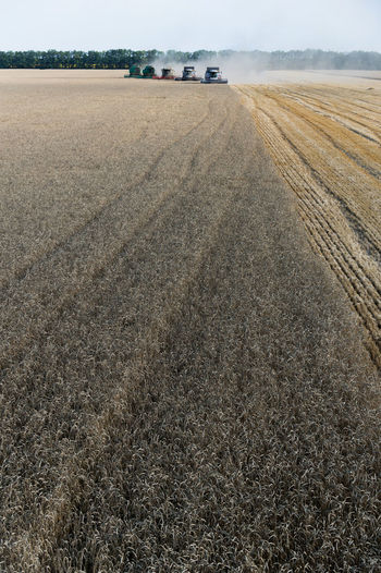 Russia, Krasnodar region, agriculture, wheat, harvesting wheat Agriculture Arid Climate Composition Crop  Day Dirt Road Distant Dry Farm Field Grass Grassy Harvesting Hay Horizon Over Land Landscape Outdoors Perspective Remote Rural Scene Tranquil Scene Tranquility