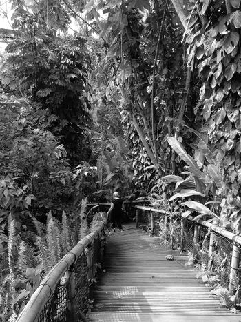 The Eden Project Black And White Cornwall Uk
