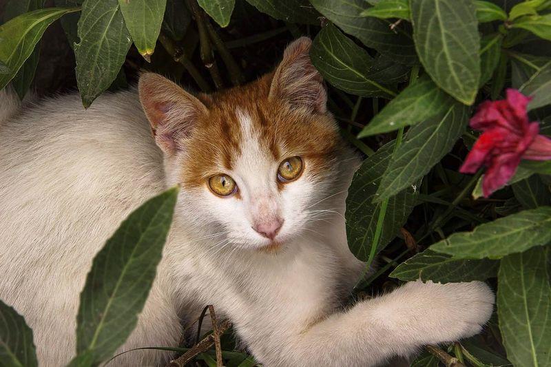 Portrait of cat on plant