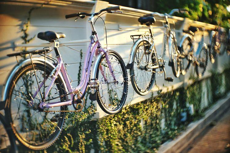 hang Bike Suspension Hung Wall Thailand Bangkok