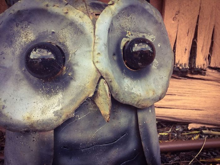 Mysterious Owl ~ Garden Feature 🌳 Close-up Damaged Weathered Extreme Close-up Bad Condition Day Obsolete Owl Ornamental Garden Ornaments Focus On Foreground Garden Garden Owl No People Ipadphotography Halloween Ghostly Wide Eyes Sad & Lonely