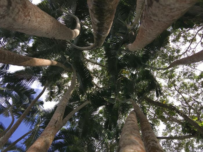 Beauty In Nature Branch Day Forest Growth Low Angle View Nature Outdoors Palm Tree Sky Tree Tree Trunk
