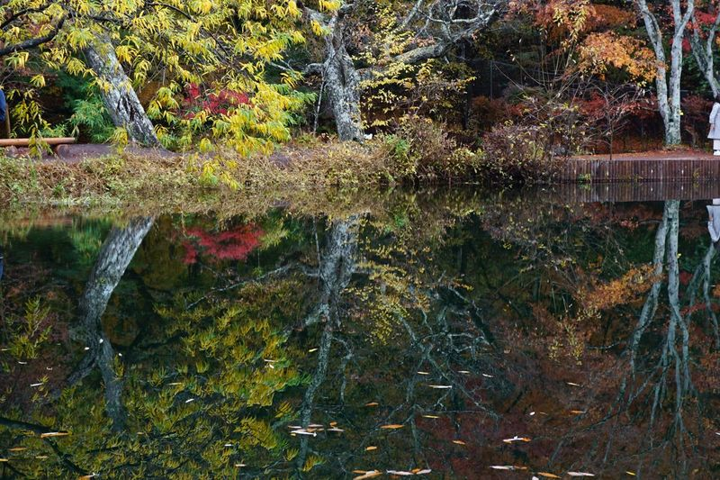 Autumn colors Forest Karuizawa Water Plant Growth Nature Day Full Frame Tree Reflection Leaf Lake Outdoors