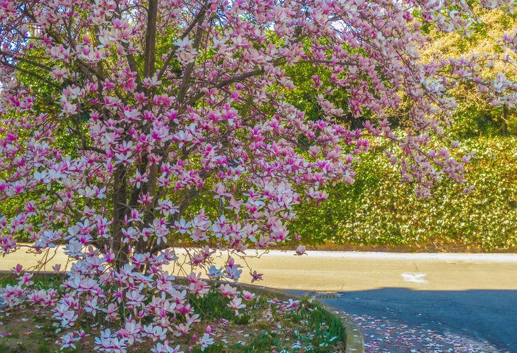 Spring in