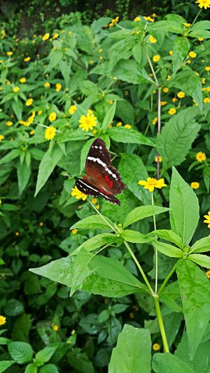 Butterfly Leaf Green Color One Animal Nature Plant Animal Themes Butterfly - Insect Close-up No People Outdoors Day Beauty In Nature Animals In The Wild Puerto Vallarta Mexico Hello World Merhaba Hola! Travel Phtography 2016 Maximum Closeness