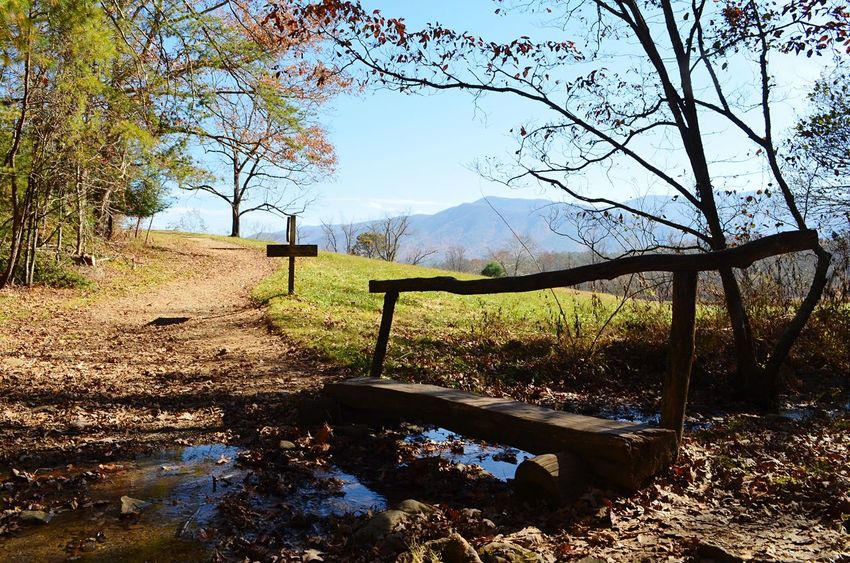 Trail in the Smokey mountains Day No People Tree Nature Sky Sunlight Beauty In Nature Outdoors Mountain