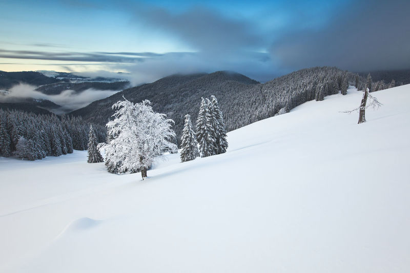Foggy winter morning in rodnei mountains, romania.