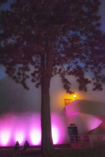 Night Tree Beauty In Nature Illuminated Built Structure Star - Space Architecture Outdoors Mood Captures Low Angle View Exceptional Photographs EyeEm Gallery Master Class Shape And Pattern Building Exterior Modern Travel Destinations Architecture