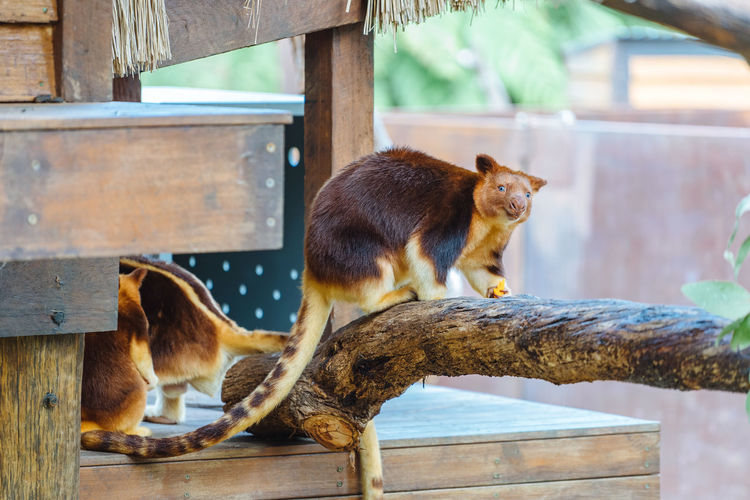 Two cats sitting on wood in zoo