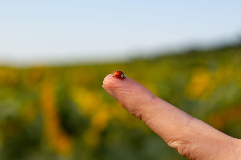 Close-up of hand feeding on leaf against sky