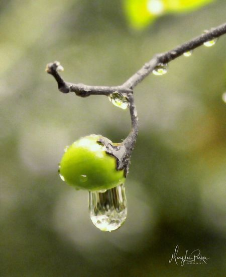 The Week On EyeEm liquid sunshine Green Color Outdoors Close-up No People EyeEm berry Drop