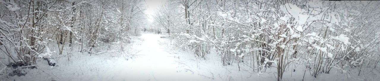 Winter 2013. A walk in the park Panorama Winter Snowy