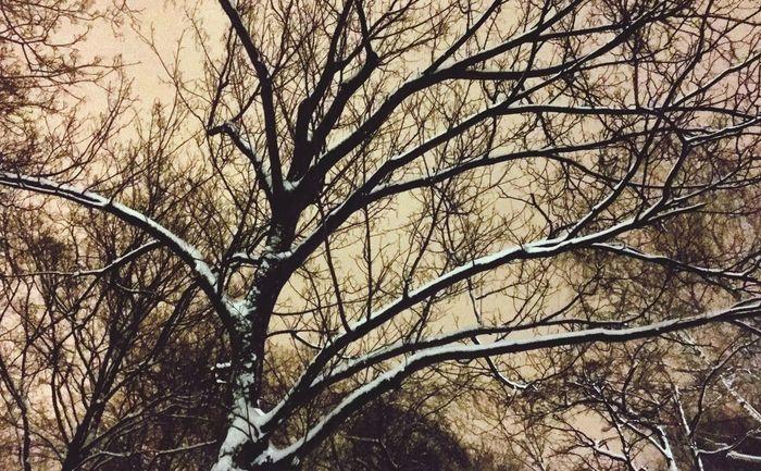 Schnee Snow Winter Ast Sky Night