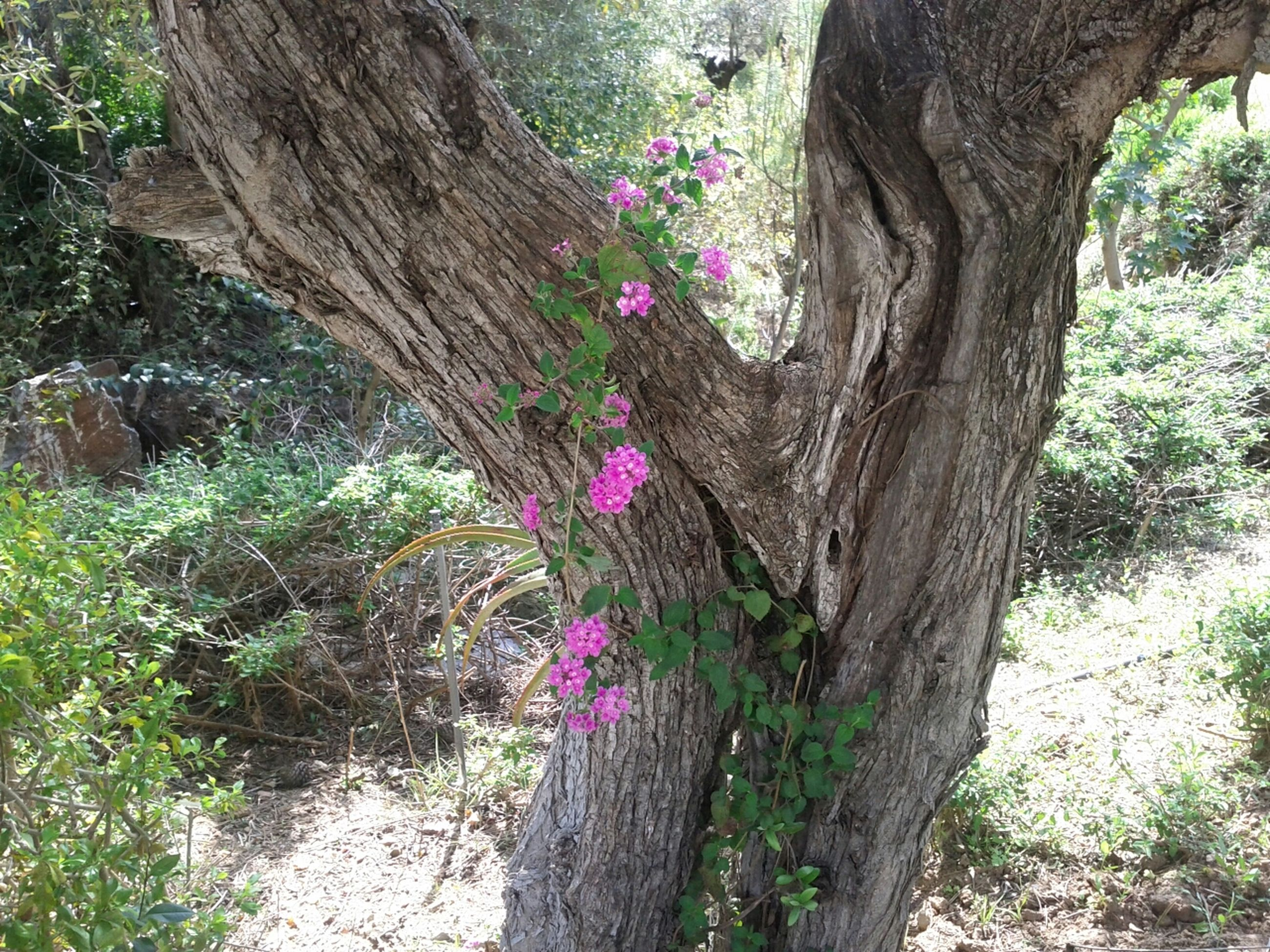 tree trunk, growth, flower, tree, nature, beauty in nature, plant, tranquility, fragility, freshness, growing, branch, close-up, purple, outdoors, day, botany, focus on foreground, wood - material, sunlight