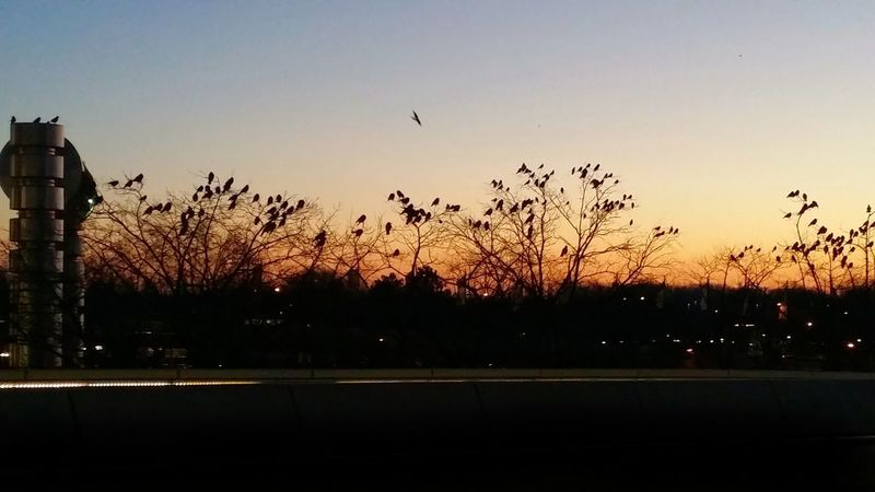 Airport Tegel Animal Themes AntiM Architecture Beauty In Nature Bird Birds Building Exterior City Crows Day Flying Light And Shadow Melancholic Landscapes Nature No People Outdoors Silhouette Silhouettes Sky Sunset Tree Winter
