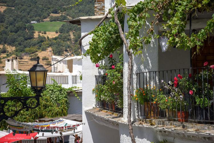 #Capileira #Alpujarras #Granada Granada, Spain Andalucia Spain Bnw_friday_eyeemchallenge EyeEmNewHere EyeEm Selects Arquitecturas Tree Architecture Residential Structure Exterior