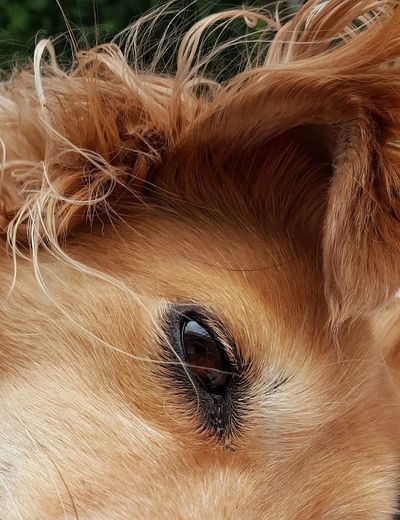 Animal Themes AntiM Brown Dog Close-up Day Dog Dog Eye Dog Portrait Domestic Animals Looking At Camera Mammal No People One Animal Outdoors Pets Portrait The Street Photographer - 2017 EyeEm Awards Pet Portraits