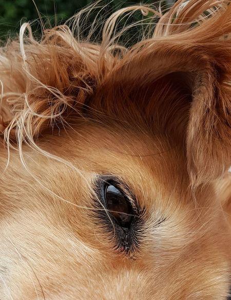 Animal Themes AntiM Brown Dog Close-up Day Dog Dog Eye Dog Portrait Domestic Animals Looking At Camera Mammal No People One Animal Outdoors Pets Portrait The Street Photographer - 2017 EyeEm Awards Pet Portraits