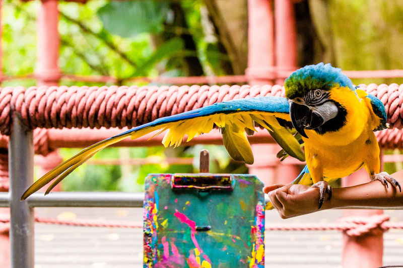 Close-up of parrot perching on metal