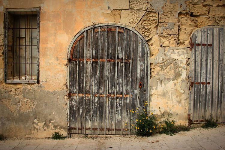 old Maltese