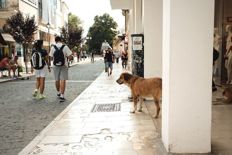 Eye4photography  EyeEm Selects EyeEm Gallery Sunlight Sun Light And Shadow Sunlight And Shadow Animal Animal Themes Canine People People Watching Summer Greece Holiday Corfu Vacation Streetphotography Street Urban Urbanphotography Full Length Dog Walking Sidewalk Paving Stone Pavement Street Scene