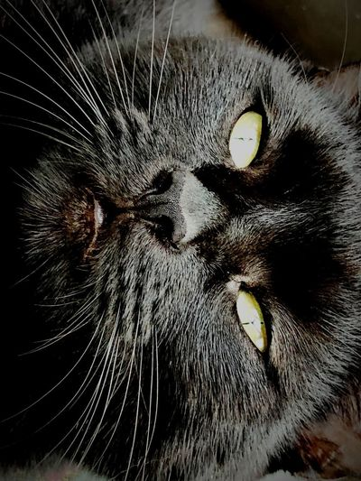 Loving Cat Cat Animal One Animal Animal Body Part Eye Animal Eye Portrait #urbanana: The Urban Playground