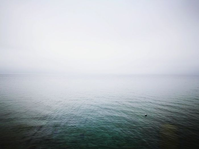 Water Tranquil Scene Nature Sea Horizon Over Water Fog Tranquility Scenics Outdoors Beauty In Nature No People Sky Day Landscape Autumn Melancholy Travel Destinations Reflection Lake Duck Animal Themes Sea Life Beauty In Nature Nature Light And Shadow Tranquility