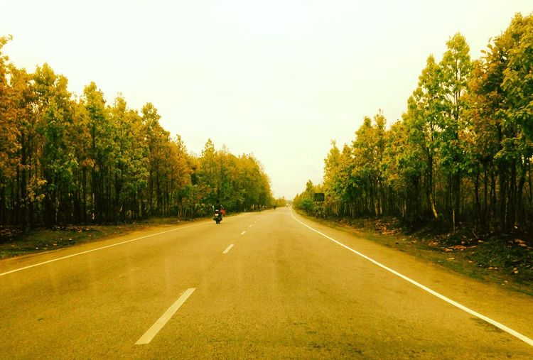 Tree Road Transportation The Way Forward Outdoors Street Asphalt Clear Sky Nature Sky Day Growth Real People One Person Beauty In Nature Landscape Men Grass People