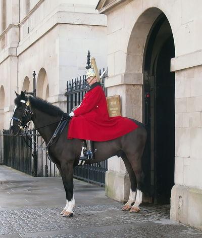Horse's Guarde
