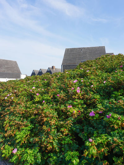 Architecture Beauty In Nature Blooming Blue Built Structure Cloud Cloud - Sky Day Flower Fragility Freshness Grass Green Color Growing Growth Nature No People Northsea Outdoors Plant Sky Sylt Sylt Strand Sylt, Germany Sylt_collection