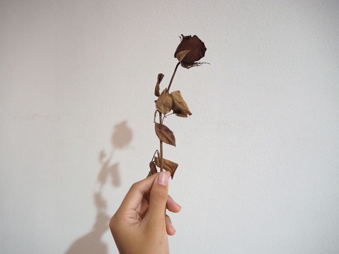 Cropped hand holding wilted flower