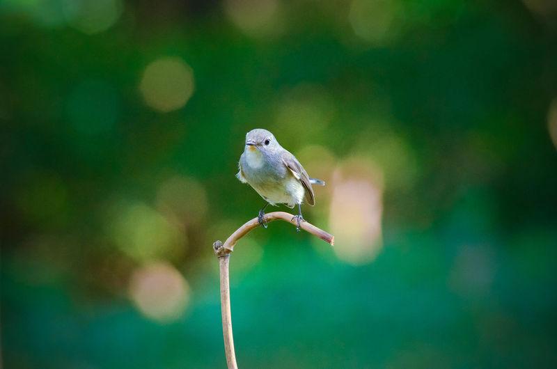 Close-up of a bird on stem