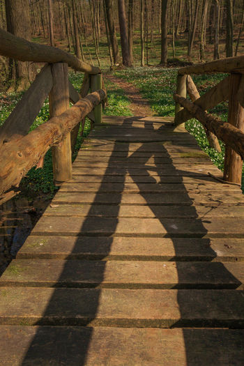 Walk me to the bridge. Anemone Nemorosa Buschwindröschen Day Ficaria Verna Forest Forest Path Lesser Celandine Nature No People Nusshain 04 17 Outdoors Scharbockskraut Shadow Springtime Way Forward Wood - Material Wood Anemone Wooden Bridge