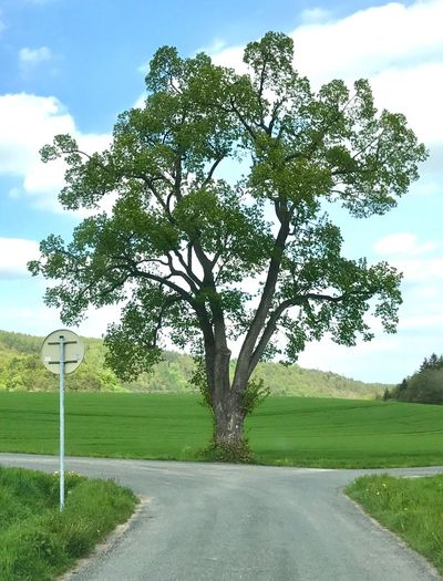 Tree Nature No People Landscape The Czech Republic Beauty In Nature Outdoors Naturephotography Nature_collection Nature Photography Trees Tree_collection  Trees And Sky Tree And Sky Green Green Color Green Green Green!  Green Nature Green Leaves Freshness Day