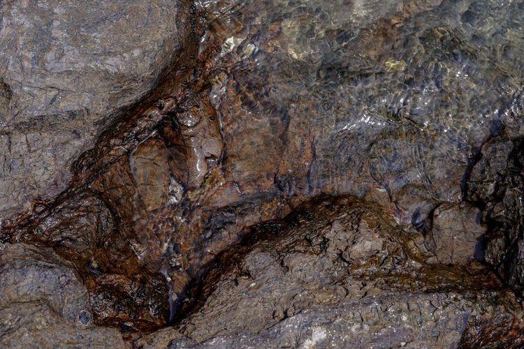 Close-up of crocodile on rock