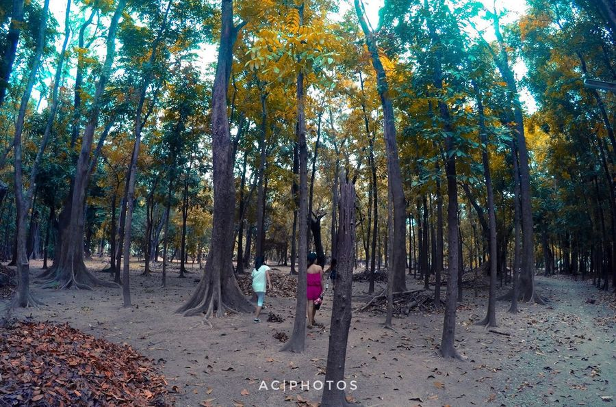 Tree Nature Autumn Outdoors Beauty In Nature Sand Growth Tree Trunk Forest Tranquility Landscape Day People Clsu Nueva Ecija