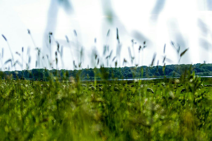 lying in the grass, relaxing Grass Nature Beauty In Nature Outdoors Green Color Lying In The Sunshine Relaxing In The Sun Relaxing Moments Relaxation Relaxing Grass Beauty In Nature Eyembestpics Eyem Best Shots Eyemphotography Love To Take Photos ❤ Eyem Gallery Pentax K5ll