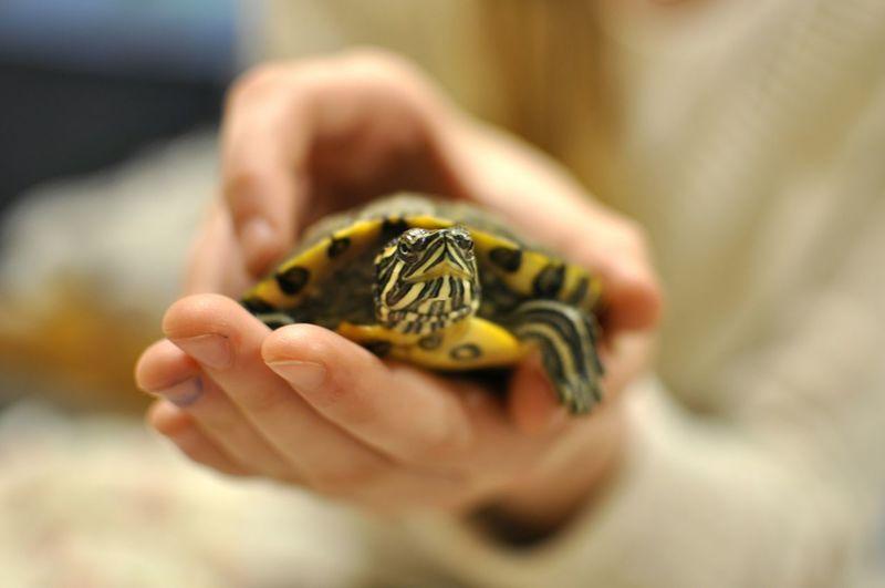 Żółw Zwierzątko черепаха Turtle 🐢 Animal 😃 35mm 1.8 Nikon D90