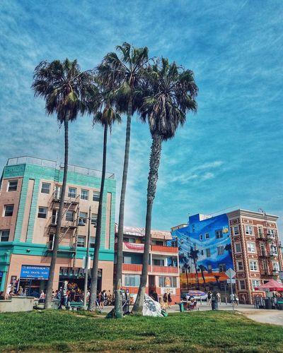 A stroll through beautiful Venice Beach Arts Culture And Entertainment