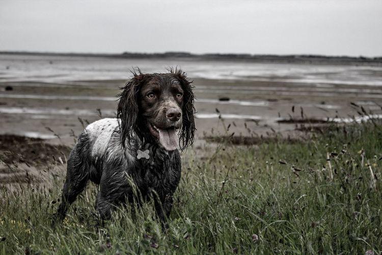 Wet dog on grass