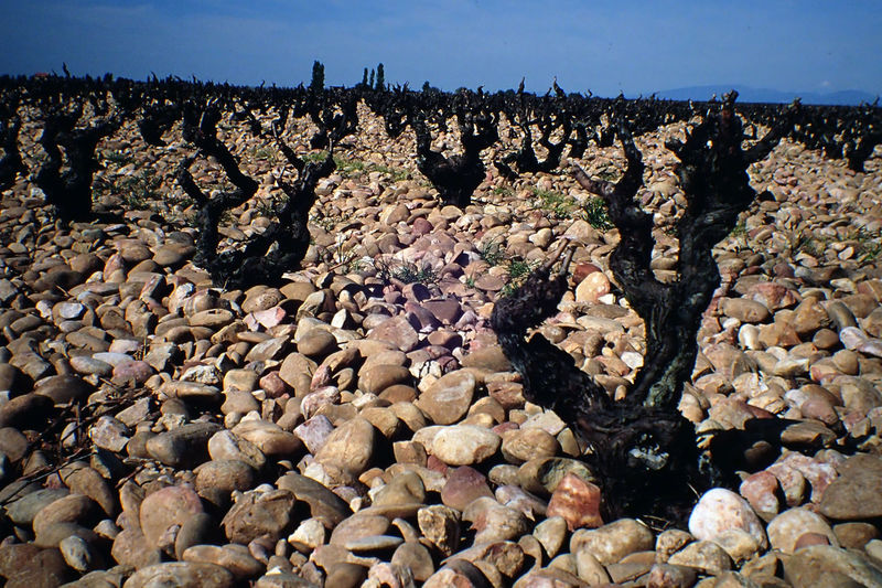 Agriculture Chateauneufdupape France No People Outdoors Vineyard Winter