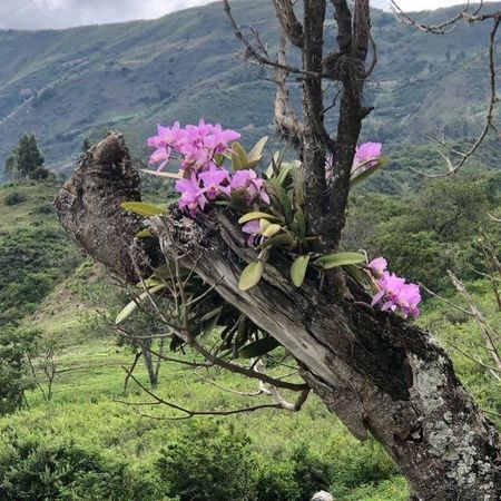 Plant Flowering Plant Flower Beauty In Nature Nature Tree Growth