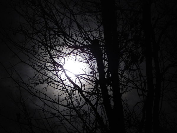 Moon Night Photography Night Shadows Beauty In Nature Moon Silhouette No Edit/no Filter No People Outdoors Scenics Tranquil Scene Tranquility Tree Tree Silhouette