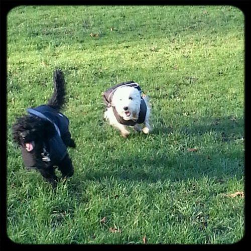 Woof ! Happy Dog