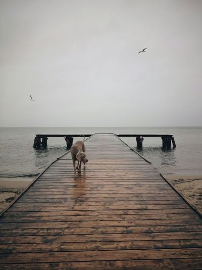 Poland EyeEm Best Edits Landscape EyeEm Best Shots Autumn VSCO Weimaraner Pet Portraits