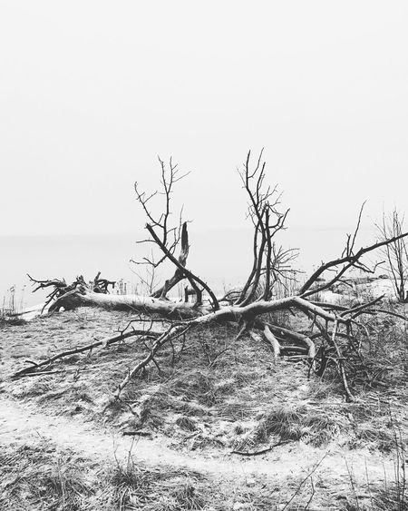 Clear Sky Nature Tree No People Day Tranquility Bare Tree Outdoors Scenics Tranquil Scene Sky Damaged Sea Dead Tree Landscape Branch Beauty In Nature Water Beach Natural Disaster IPhoneography IPhone